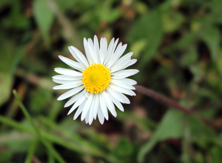 underbrush: daisy Stock Photo
