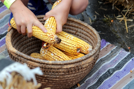 natural sack corn
