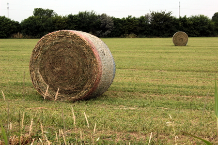 grain field Stockfoto - 117646810