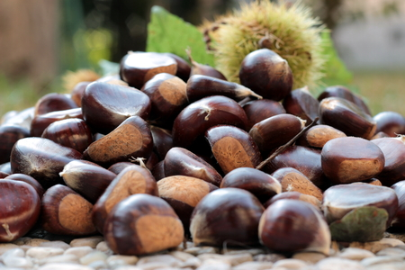 sone chestnuts in autumn