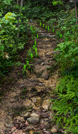 Walk way hill upright eastern Thailand