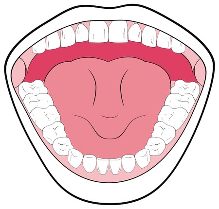 opened mouth: Vector Opened Mouth Showing the Teeth Tongue Tonsils Can be useful in Schools Clinics - You can write Types of Teeth parts of Mouth Simple Attractive Illustration