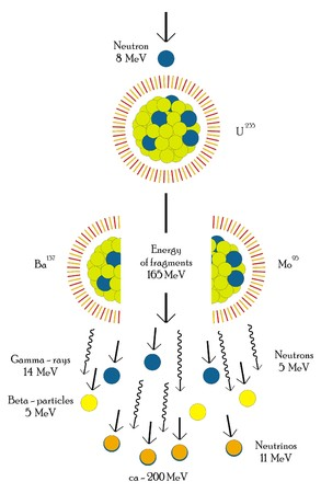 fission: Vector Nuclear fission chain reaction of Uranium Atom Useful for Educational Purposes Scientific Field