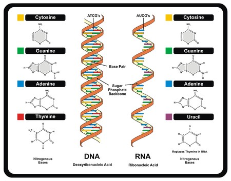 Vector - DNA and RNA
