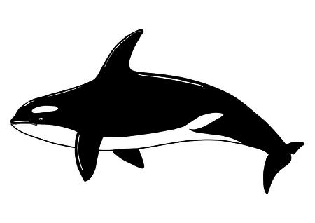 Killer Whale Fish