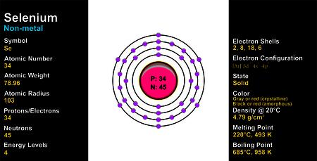 electron shell: Selenium Atom Illustration