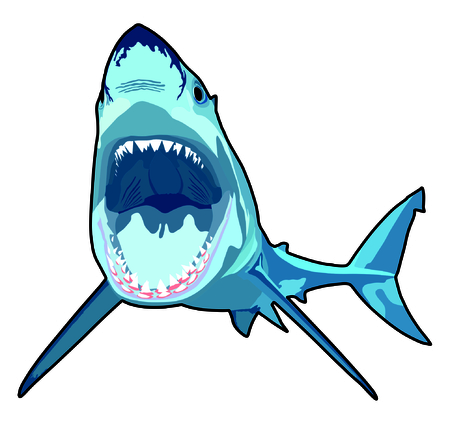 carcharodon: Shark with opened mouth in attack position and sharp teeth