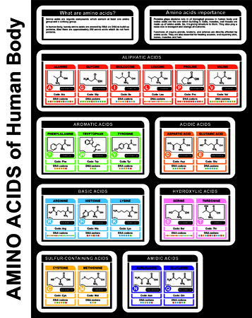 Amino Acids of Human Body (structure of compounds, groups, details) Aliphatic, Aromatic, Acidic, Basic, Sulfur-containing Acids - DNA condon - Forming Proteins - Educational Material