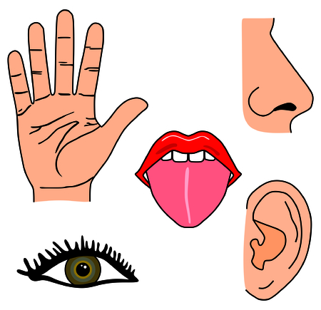 Human Five Senses Set Hand for Touch, Eye for Vision, Tongue for Taste, Nose for Smell, and Ear for Hearing Educational and Medical Material