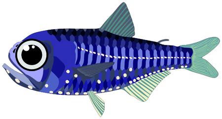 dorsal: Lantern Fish lives in ocean and under deep blue water life one of sea filterers