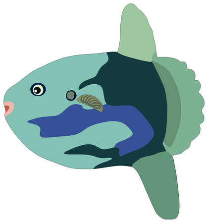 Sunfish Fish lives is ocean and under deep blue water life one of sea filterers Illustration