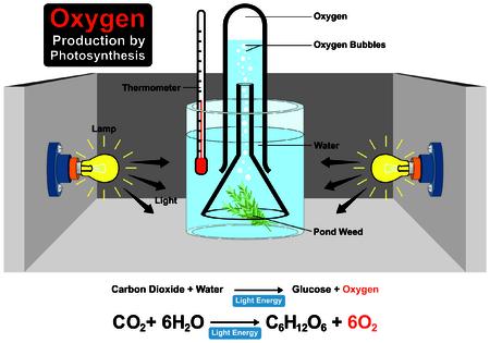 Producción de oxígeno por proceso de fotosíntesis Experimento con fórmula química Foto de archivo - 71810396