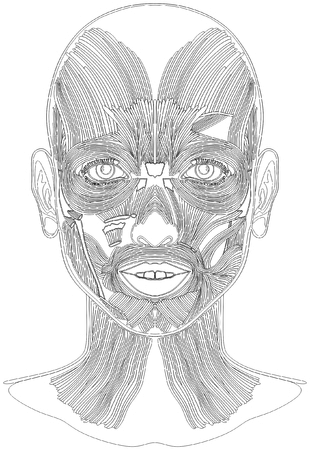 Bosquejo de arte de la línea de anatomía de los músculos de la cara humana