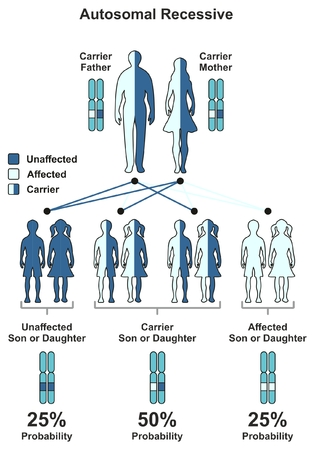 Autosomal Recessive Hereditary Trait infographic diagram including parents father and mother probability of son and daughter to be affected unaffected or carrier for genetic science education 일러스트