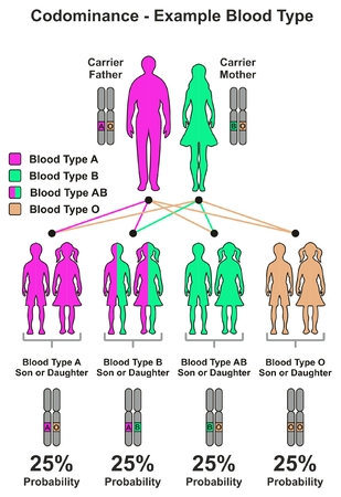 Codominance Example Blood Type infographic diagram including parents carrier father and mother probability of son and daughter to be have different combinations of dominant recessive genes