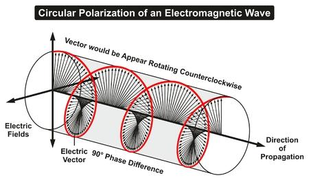 전자기파의 원형 분극화 전계의 위상차를 보여주는 선형 그래프 물리학 교육을 위해 시계 반대 방향으로 회전하는 전파의 위상차 방향 일러스트