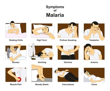 말라리아의 증상 오한을 떨리는 것을 포함하는 개념적 드로잉을 가진 infographic 다이어그램 발열 땀이 두통 메스꺼움 구토 설사 빈혈은 의학 교육을 위 일러스트