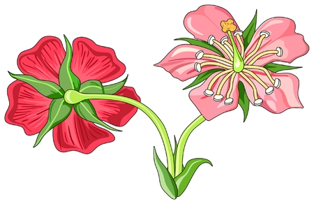 Bloemendelen Diagram voor- en achteraanzicht met alle onderdelen die als nuttig zijn gemarkeerd voor schoolonderwijs en plantkundebiologie - niet-gelabeld Stockfoto - 80715724