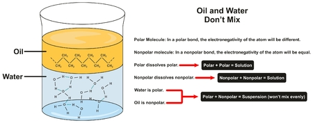 Water and Oil don't Mix infographic diagram showing separated layers and molecules of each one for chemistry science education