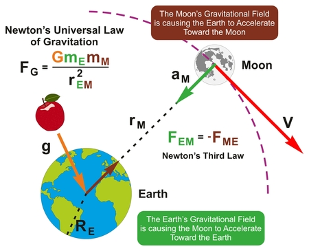 Newton's Universal Law of Gravitation infographic diagram with formula and example of earth and moon attraction of each other according to their masses for physics science education 일러스트