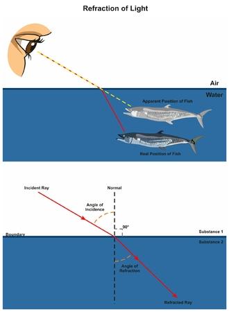 Brechung des infographic Lichtes Diagramms mit einem Beispiel des menschlichen Auges untersuchend Fische im Wasser, das einfallenden und gebrochenen Strahlenwinkel des Vorkommens und der Brechung für Physikwissenschaftsbildung zeigt