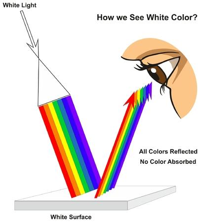 Wie wir Weiß sehen Das Infographikdiagramm der Farbe Weiß zeigt das sichtbare Spektrum des Lichts auf der Oberfläche und die Farben, die entsprechend der Farbe der Physikwissenschaft reflektiert oder absorbiert werden