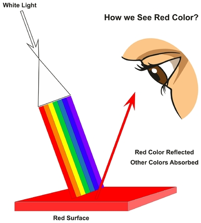 How we See Red Color infographic diagram showing visible spectrum light on surface and colors reflected or absorbed according to its color for physics science education