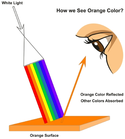 How we See Orange Color infographic diagram showing visible spectrum light on surface and colors reflected or absorbed according to its color for physics science education