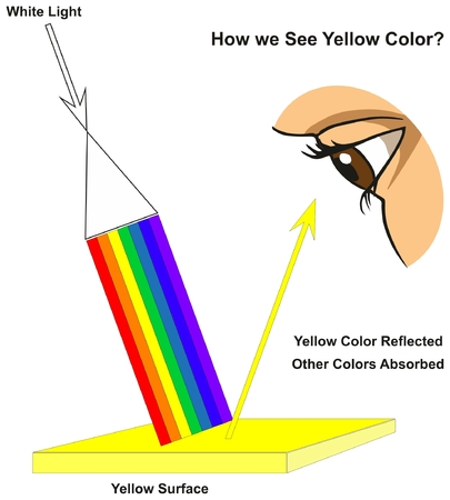 How we See Yellow Color infographic diagram showing visible spectrum light on surface and colors reflected or absorbed according to its color for physics science education Vectores