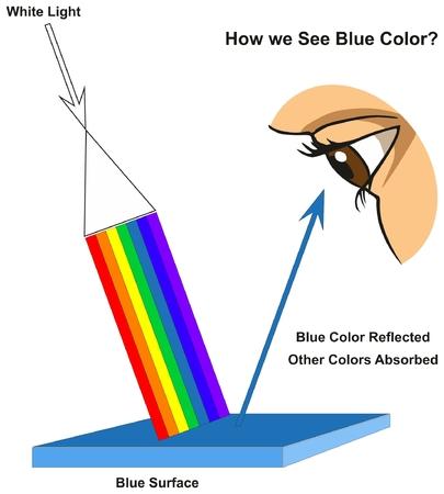 우리가 보는 방법 푸른 색 인포 그래픽 다이어그램은 표면의 가시 스펙트럼 빛과 물리 과학 교육을위한 색상에 따라 반사되거나 흡수 된 색상을 보여줍니다.
