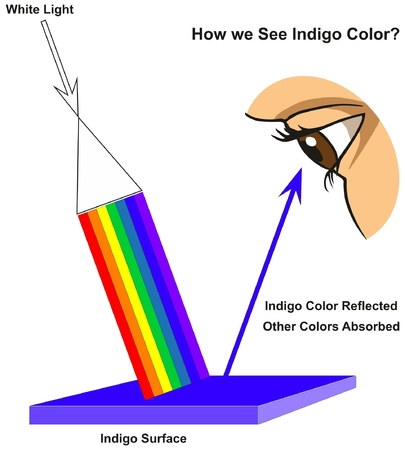How we See Indigo Color infographic diagram showing visible spectrum light on surface and colors reflected or absorbed according to its color for physics science education Vectores