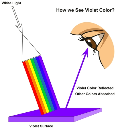 How we See Violet Color infographic diagram showing visible spectrum light on surface and colors reflected or absorbed according to its color for physics science education Ilustração