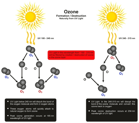 Ozone Formation Destruction infographic diagram by naturally form UV light showing creation and destruction of ozone molecule wavelength for science education
