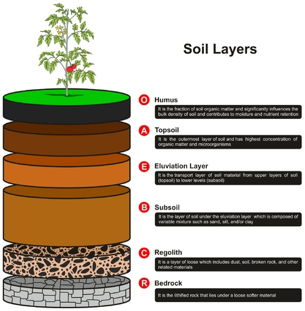 Soil Layers infographic diagram showing as slices including humus topsoil eluviation layer subsoil regolith and bedrock with definitions for geology science education