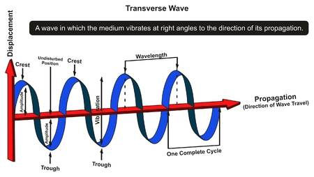 Transverse Wave Infographic Diagram showing structure with displacement and propagation axis with all parts including crest amplitude vibration wavelength complete cycle for physics science education Ilustração