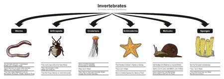 Diagrama infográfico de clasificación y características de animales invertebrados que muestra todos los tipos, incluidos gusanos, artrópodos, cnidarios, equinodermos, moluscos, esponjas para biología y morfología, educación científica.
