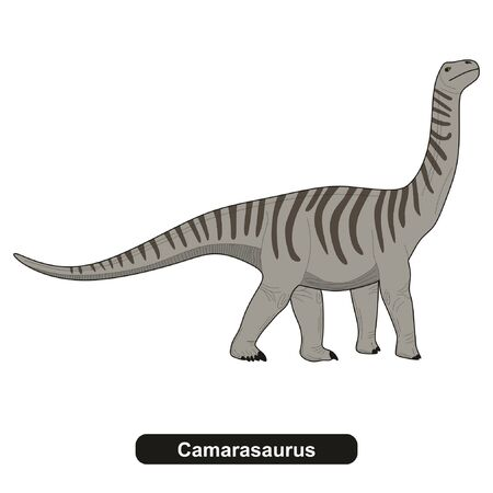 Camarasaurus Dinosaur Extinct Animal