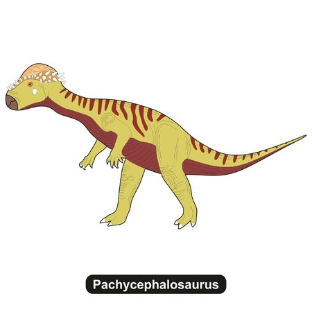 Pachycephalosaurus Dinosaur Extinct Animal