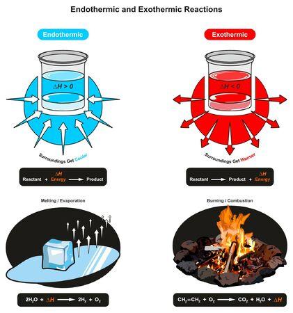 Diagramma infografico di reazioni endotermiche ed esotermiche che mostra la relazione tra energia reagente e prodotto anche esempi di fusione di cubetti di ghiaccio e fuoco che brucia per l'educazione scientifica in chimica