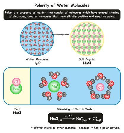 Diagrama infográfico de la polaridad de las moléculas de agua que muestra su vista microscópica junto con la estructura cristalina de la sal y cómo se disuelve en agua para la educación en ciencias químicas