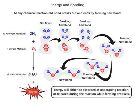 Infografik-Diagramm zu Energie und Bindung mit Beispiel für die Bildung einer neuen Bindung nach dem Aufbrechen der alten Bindung und der Freisetzung von Energie des Wassermoleküls für den Chemieunterricht Vektorgrafik