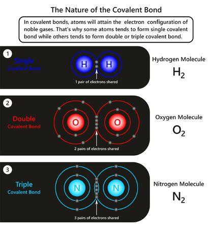Die Infografik zur Natur der kovalenten Bindung zeigt Beispiele von Atomen in kovalenten Bindungen, wie einige von ihnen dazu neigen, eine Einfachbindung zu bilden, während andere für die Chemiewissenschaft eine Doppel- oder Dreifachbindung bilden Vektorgrafik