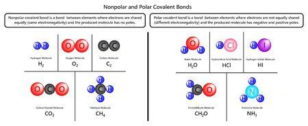 Infografik-Diagramm zu unpolaren und polaren kovalenten Bindungen mit Beispielen für Wasserstoff Sauerstoff Kohlendioxid Methan Wasser Formaldehyd und Ammoniakmoleküle für den Chemieunterricht Vektorgrafik