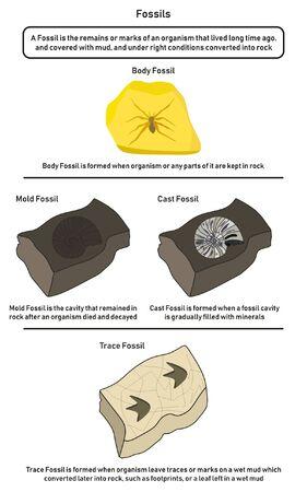 Diagramma infografico di fossili tra cui calco di stampi corporei e tracce di fossili che mostrano come l'organismo viveva molto tempo fa formandoli in natura dal fango alla roccia e le differenze per l'educazione scientifica geologica