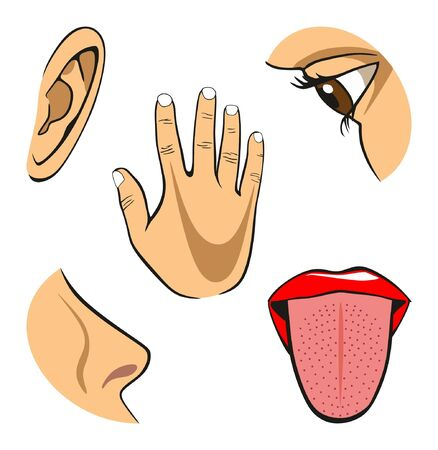Human Five Senses diagram including eye for vision nose for smell ear for hearing hand for touch and tongue for taste for physics science education Stok Fotoğraf - 130476318