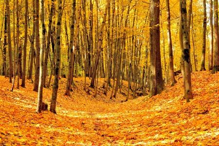 ravine: ravine strewn with maple leaves