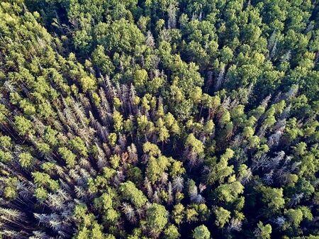 Wunderschöner Panorama-Drohne-Panoramablick auf den Bialowieza-Wald - einer der letzten und größten verbleibenden Teile des riesigen Urwaldes, der sich einst über die Europäische Ebene erstreckte