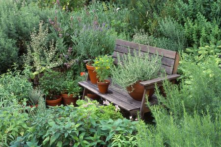 Large garden with lots of herbs, some on a bench.