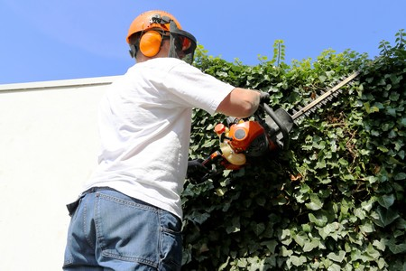 tree removal service: Horticulture: Pruning and cutting hedges with chainsaw