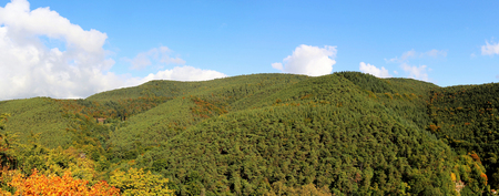 Forest with autumnal coloring, panoramic view Фото со стока